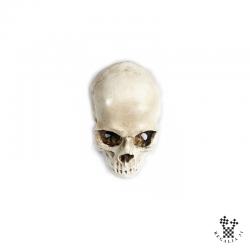 Crâne en plâtre ou résine, grandeur nature