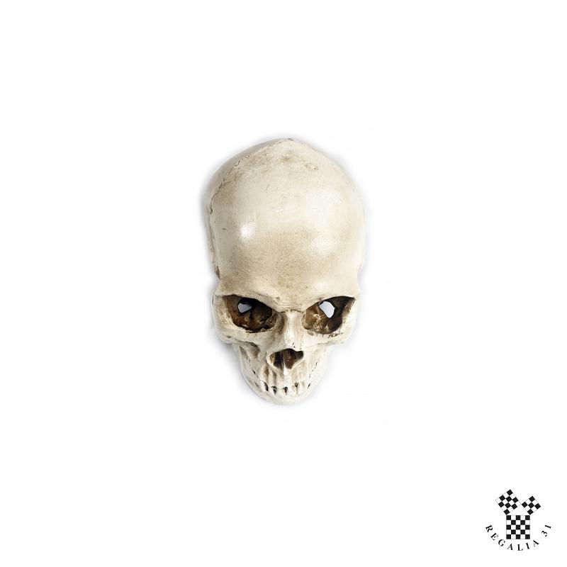 Crâne en plâtre ou résine